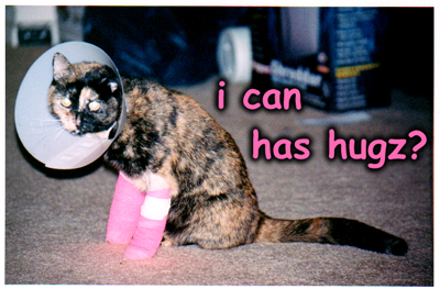 ---LOLcats--- - Page 4 Icanhashugz-thumb
