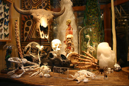 Window Display at the Evolution Store in Soho