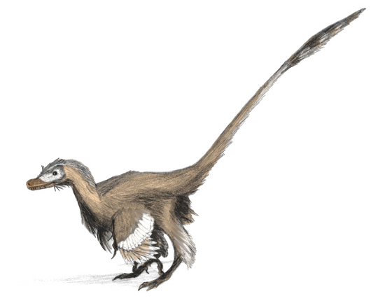 Feathered Velociraptor mongoliensis