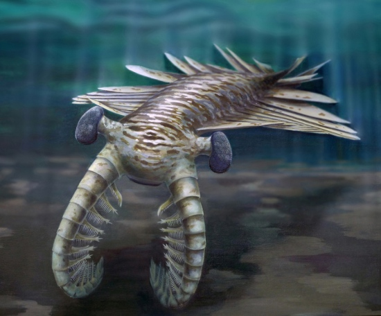 The sharp-eyed, metre-long Anomalocaris.