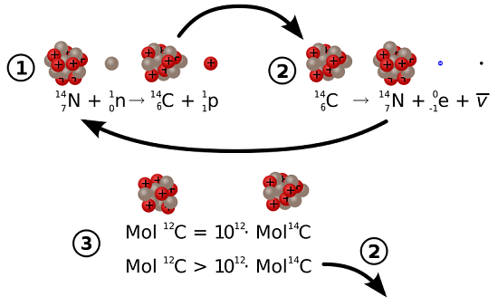 1. Formation of Carbon-14<br /> 2. Decay of Carbon-14<br /> 3. The