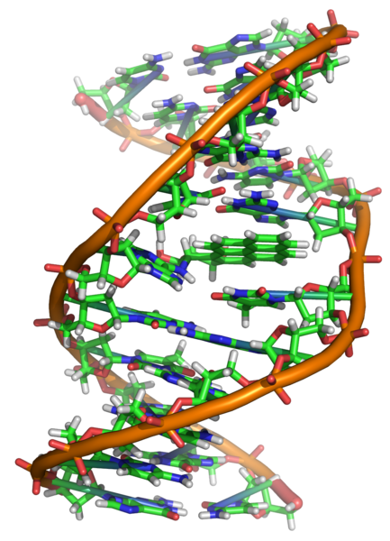 DNA Covalently Bonded to the Cancer-Causing Mutagen in Tobacco Smoke, benzo[a]pyrene.