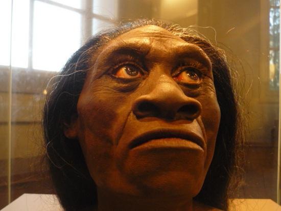 Homo floresiensis - reconstruction