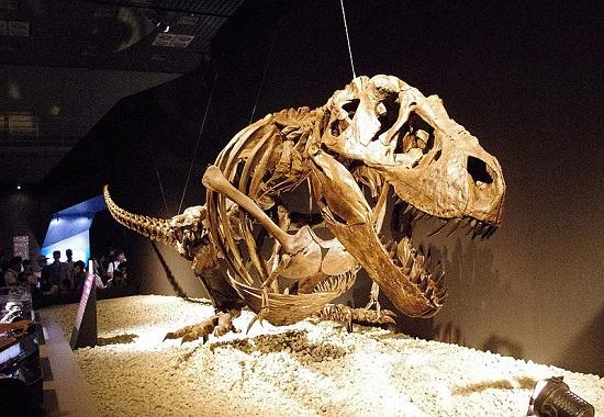 Tyrannosaurus resting pose